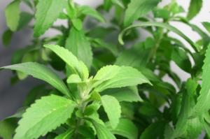 ObmqBkTZ-photo-stelva-plante-s-